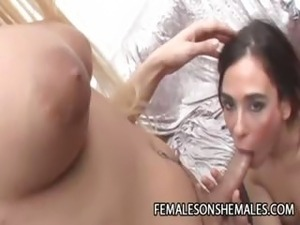shemale ladyboy tgirl transsexual tranny gallery
